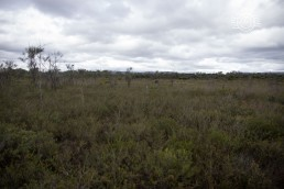 Allison Baird Reserve
