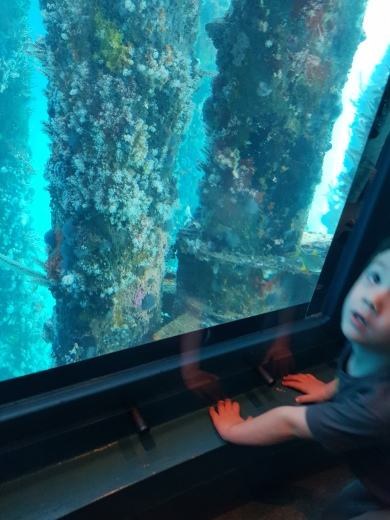 Liam enjoying the marine life