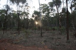 Habitat the camera trap is placed in @ Dryandra