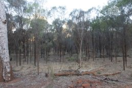 Habitat to the south of the camera trap - note sheoak