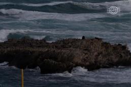 NZ Fur Seal @ Cathedral Rocks, Rottnest Is