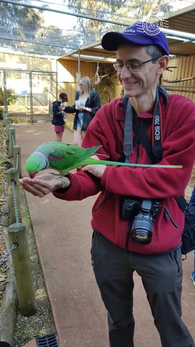 Daz feeding Indian ringneck @ Bunbury wildlife park